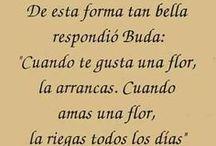 budisml