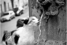 Gotta love cats