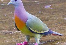 Pigeons / by Cheryl Fruzzetti