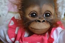 Affen Babys