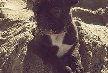 Dog<3