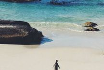 South African Travel / http://www.flyabs.com/