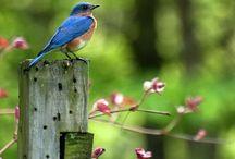birds / beautiful birds and animals