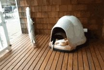 gatti divertenti in video