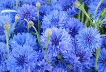 Naturaleza / Flores