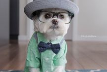 Doggie Fashion