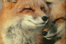 I love foxes. / Лисы. Лисаньки. Лисички. Фотографии, картинки, игрушки, выкройки и прочее, прочее, прочее...