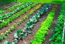 101 Garden ideas