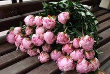 Цветы / Красивые изображения цветов