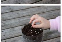 Bitki yetiştirme