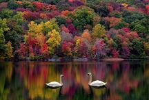 Photography Autumn / The magical colors of autumn
