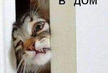 ЧЕМ БОЛЬШЕ УЗНАЮ ЛЮДЕЙ, ТЕМ БОЛЬШЕ Я ЛЮБЛЮ - КОШЕК )))