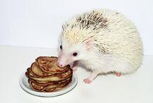 Homemade Hedgehog Treats