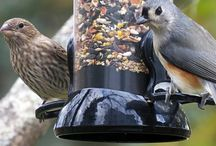 Come fly with me! Tips & Advice / Everything you need to know about feeding the birds!