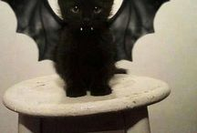 Anak kucing bat