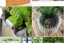 Идеи для размещения растений