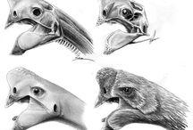 Dinosaur - Oviraptor