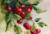 акварель ягоды и фрукты