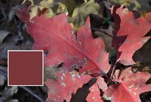 Natural Colors / Colors captured directly from nature using the Nix Pro Color Sensor.