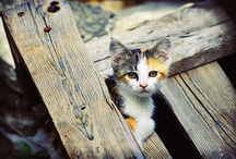 Calico / by Maggie Mize