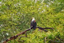 Malawi Wildlife / Wild animals & birds from Malawi.