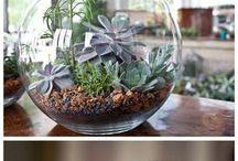 Cactus planten in glas