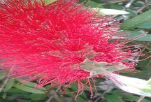 ~flower love~