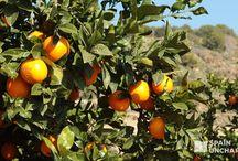 Spain Foodie / Best local food discoveries