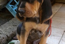 Brando and Jackie / Me dogs
