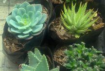 Plantas e ideas