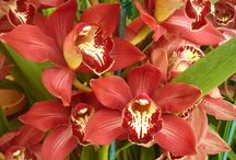 Happy New Year / Happy New Year! Brookside Orchids will be closed Jan 1st through the 3rd, 2015.