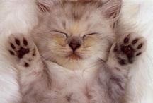 Cute Kittens / by Connie Kidd