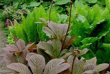 Растения, которые мне нужны