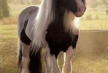 Horses  / by Jennifer Newby