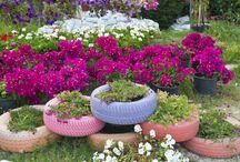 Gardening / 0