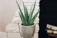 Indoor plants I can't kill