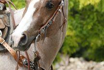 horses / by heidi Lonergan