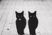 Catlike / by Mathilda Schatten