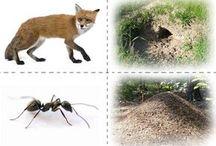 zwierzęta domy