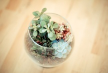 green thumb  / by Jessica Mecleary