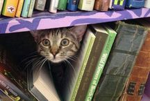 Book for ever / Cat