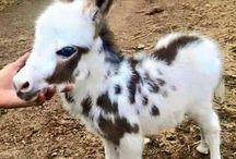 Âne Donkey