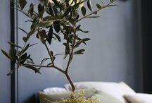 plants&flowers for studio