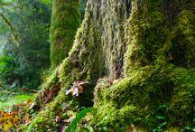 Trees / Hug a tree!