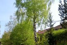 Drzewa / Drzewa w krajobrazie