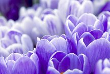 Purple perfect / Florals