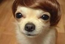 Dogs with funny haircuts / by Janet Weil