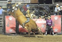 Rodeo News Today / Top Stories in the Rodeo Industry