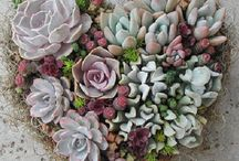 blomme en plante