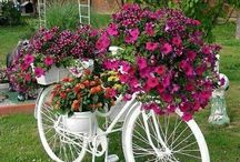 Cycle flowers